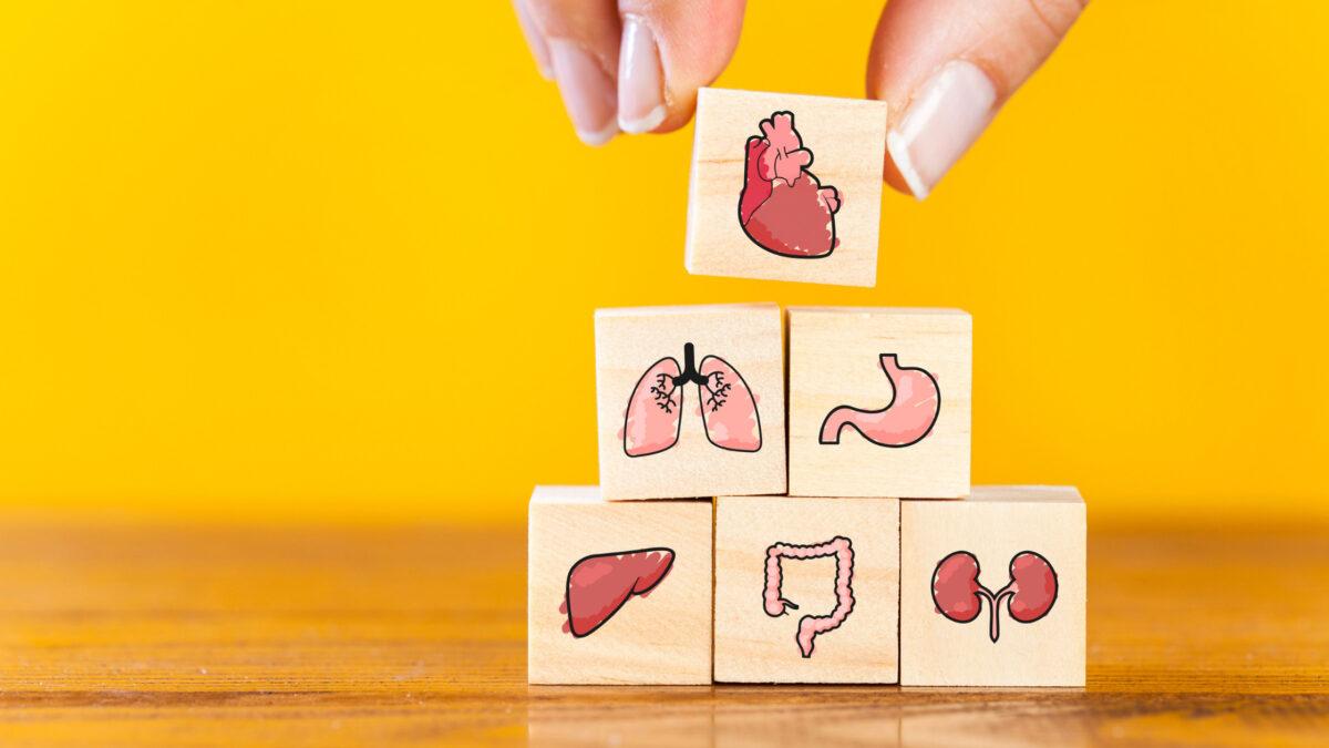 内臓のイラスト